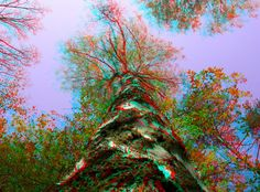Growing 3D Anaglyph by yellowishhaze on DeviantArt