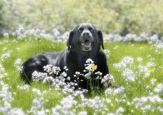 Does your dog need a holiday? Guide to what to do with your dog when you go away - Pet Problems Solved