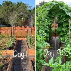 Backyard Vegetable Gardens, Backyard Garden Design, Vegetable Garden Design, Backyard Landscaping, Backyard Layout, Landscaping Ideas, Garden Plants, Garden Trellis, Garden Beds