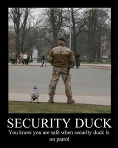 Funny pictures about Security Duck is on patrol. Oh, and cool pics about Security Duck is on patrol. Also, Security Duck is on patrol. Funny Animals With Captions, Funny Pictures With Captions, Picture Captions, Cute Funny Animals, Funny Animal Pictures, Funny Cute, Best Funny Pictures, Funny Photos, The Funny