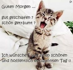 funpot: Guten Morgen von Renilinz - Pin to Pin Good Morning Good Night, Good Morning Wishes, Good Morning Quotes, Image Clipart, Art Clipart, Funny Animal Videos, Funny Animal Pictures, Funny Images, Animals And Pets