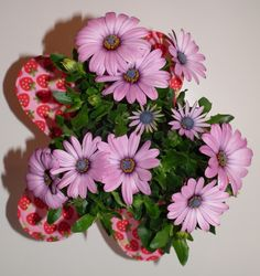 Sternenhauch Plants, Garden, Stars, Flowers, Garten, Planters, Gardening, Outdoor, Home Landscaping
