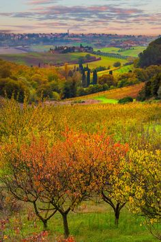 The View From The Villa - Val d'Orcia Region, Tuscany, Italy