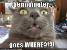 Cat Pictures Funny