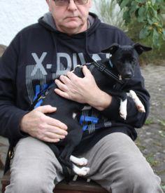 Vittorio, ein süßer, kleiner, junger Rüde (sehr zart nur 6 kg) wartet in Nordbayern! - http://www.tier-kleinanzeigen.com/ads/vittorio-ein-suesser-kleiner-junger-ruede-sehr-zart-nur-6-kg-wartet-in-nordbayern/
