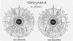 La Iridología la ciencia de diagnosticar tu salud por el iris: Introducción a la iridología