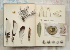 Birds in flight, an unwritten book by fiona of wild goose chase. How I adore a good collection.