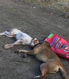 Three dogs were shot in the head and killed in a horrific case of animal cruelty. Two of the dogs' bodies were dumped into a creek and the third was found a short distance away. Demand justice for these innocent dogs.