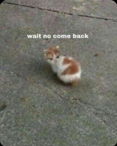 Funny Animal Jokes, Cute Funny Animals, Stupid Funny Memes, Funny Relatable Memes, Animal Memes, Cute Baby Animals, Funny Cute, Cute Love Memes, Cute Cat Memes