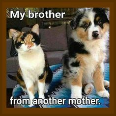 My Brother From Another Mother Dog & Cat Meme Flexible Fridge Magnet - Funny Dog Meme's - Chien Funny Animal Jokes, Cute Funny Animals, Funny Animal Pictures, Cute Baby Animals, Funny Cute, Funny Dogs, Cute Cats, Animal Pics, Funny Cat Memes