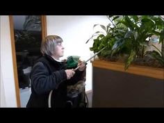 Philodenron Moonlight, ZZ Plant, Sparkling Sara, these are the best tropical plants for indoor use. Be it your home, your office, or your interior space these are the best silk plants in business when it comes to Indoor Landscaping. We give you that proper care which makes these products look...