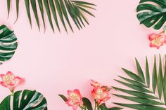 Creative Border From Flowers Palm Leaves on Pink Background Wallpaper Notebook, Pc Desktop Wallpaper, Aesthetic Desktop Wallpaper, Palm Wallpaper, Macbook Wallpaper, Pastel Wallpaper, Wallpaper Backgrounds, Powerpoint Background Design, Ipad Background
