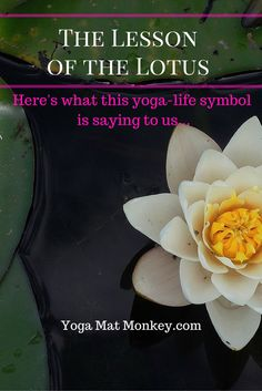 Ever wondered why the lotus flower is so symbolic in yogic culture? Here's the message behind this enduring flower, and why we need its amazing message.