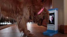 Arriva iCPooch, il dispositivo per videochiamate padrone-cane