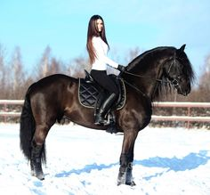 Horse in winter with its coat shaved. Goes against a horse being able to warm itself naturally.