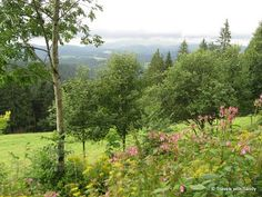Germany: The Black Forest   Travels with Sandy