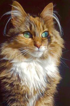 Beautiful cat - green eyes