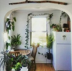 Plant-filled kitchen- so lovely!