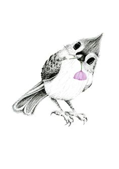 Image of Tufted Titmouse - Giclee Print - http://www.thepaperhare.com