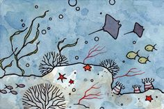 Manta Rays & Coral Reef