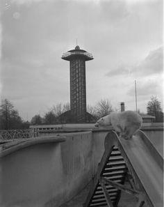 Diergaarde Blijdorp 1971