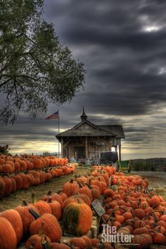 pumpkin patch under a stormy autumn sky.love the pumpkin orange against the b. pumpkin patch under a stormy autumn sky.love the pumpkin orange against the blue-grey! Beautiful Places, Beautiful Pictures, All Nature, Fall Pictures, Pumpkin Pictures, Fall Images, Best Seasons, Pics Art, Fall Harvest