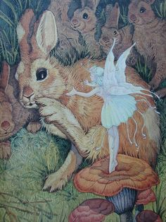 ≍ Nature's Fairy Nymphs ≍ magical elves, sprites, pixies and winged woodland faeries - Velveteen Rabbit.