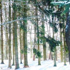 Breathe and reboot.❄ #relax #breathe #reboot #wild #wood #nature #green #winter #snowyzen #cold #sunny #tree #adventure #peaceinsoul #pure #visitczechrepublic #priroda #klid #zima #dobrodruzstvi