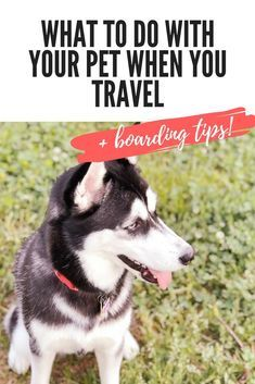 What To Do With Pets When Traveling Free Pet Sitter Worksheets Laura Bedokis What To Do With Pets When Traveling Free Pet Sit Dog Advice Pet Sitters Pets