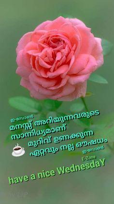 43 Best Good Morning Wednesday Malayalam Images In 2020 Good Morning Wednesday Good Morning Morning