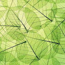 Shop Green Leaf Background Wallpaper in Flowers & Leaves Theme Custom Wallpaper, Photo Wallpaper, Wall Wallpaper, Green Wallpaper, Images Of Summer, Green Leaf Background, Create Your Own Wallpaper, Custom Wall Murals, Standard Wallpaper