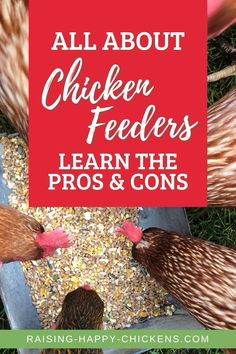 Wondering which is the best chick feeder for baby chickens? Chicks are messy and tend to kick their food all over the place. So which feeder will work best in your brooder for eliminating waste and saving money? Read on to learn about all the important quirks to know about when hatching and feeding newborn chicks. Fancy Chicken Coop, Chicken Chick, Backyard Coop, Fancy Chickens, Chicken Feeders, Distinguish Between, Nesting Boxes, Baby Chicks, Coops
