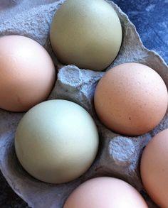 Ägg från glada höns