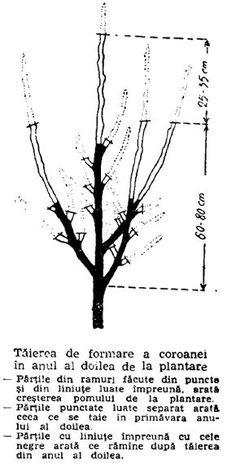 Design Case, Fruit Trees, Grape Vines, Bonsai, Hair Accessories, Gardening, Pergola, Face, Printable
