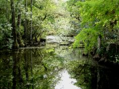 everglades | Ecotourism in the Everglades of South Florida