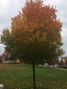 I have never seen a tree 4 colors like this