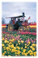 Wooden Shoe Tulip Festival and Farm