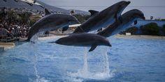 Με πλακάτ ανά χείρας και φωτογραφίες αιχμάλωτων δελφινιών, οι φιλόζωοι συγκεντρώθηκαν έξω από το Αττικό Πάρκο