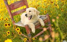 A dog in flowers #cute #dogs