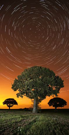 Star Trails - 40 minutes of the Earth's rotation by wreck-photography. Cosmos, Night Photography, Nature Photography, Sky Watch, Star Trails, Milky Way, Night Skies, That Way, Mother Nature