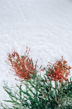 flowers-moving-water-flotsam-lisa-sorgini-3