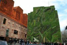 I giardini verticali: spazio al verde anche in città - Econote.it