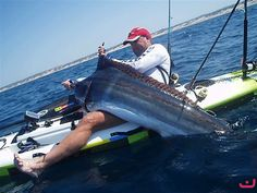 Someday! Sailfish from a yak