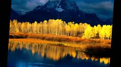 Mount Moran is a mountain in Grand Teton National Park of western Wyoming, USA. The mountain is named for Thomas Moran, an American western frontier landscape Grand Teton National Park, National Parks, Beautiful World, Beautiful Places, Beautiful Sky, Beautiful Scenery, Simply Beautiful, Yellow Tree, Yellow Leaves