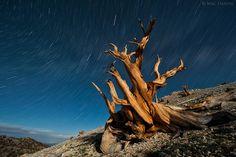Veja fotos das árvores mais antigas do mundo