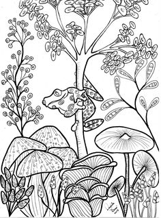 Cute tree frog and mushrooms Coloring page