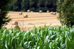 © Valérie Guilhem - Phovoir / Paysage agricole #Bretagne #Champs
