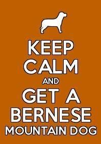 Keep Calm and Get a   Bernese Mountain Dog....  True:-)