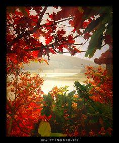 25 Breathtaking Fall Foliage Photographs