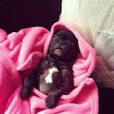 """Nighty night"", Jolie, the sleeping French Bulldog Puppy 🌙🌒🛌…"